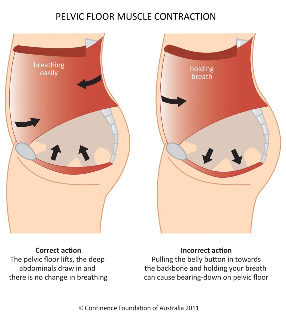 pelvic_floor_contraction_pelvicfloorfirst